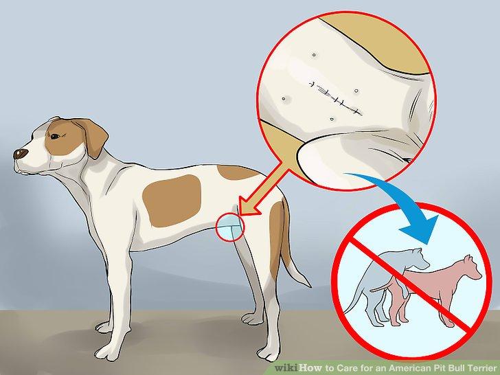 Sprühen oder kastrieren Sie Ihr Haustier.