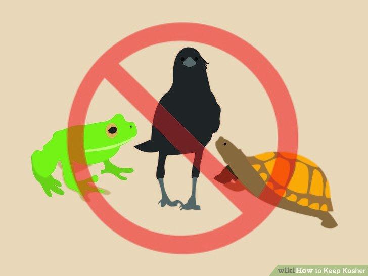 Essen Sie keine Reptilien, Amphibien, Insekten, Nagetiere oder Greifvögel.