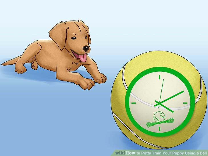 Create a play schedule for your puppy.