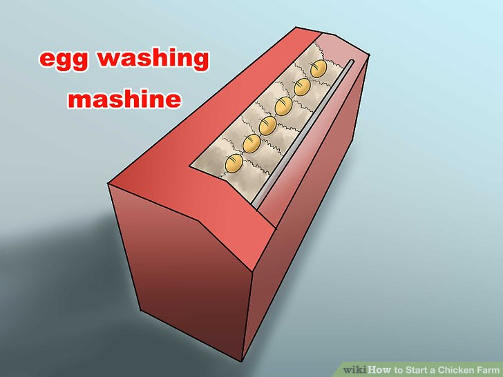 Investieren Sie in die Ausrüstung zum Waschen von Eiern für Hühner.