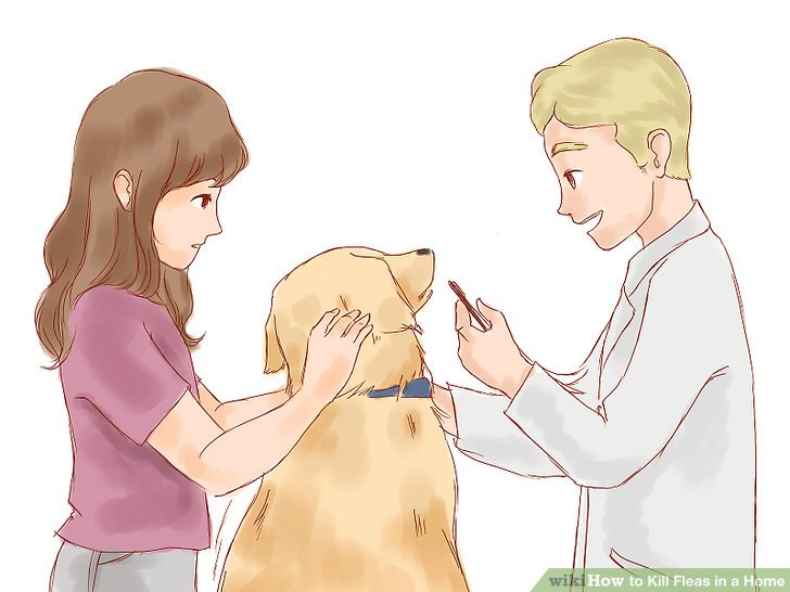 Administer a flea tablet orally to rid your pet of a flea infestation quickly.
