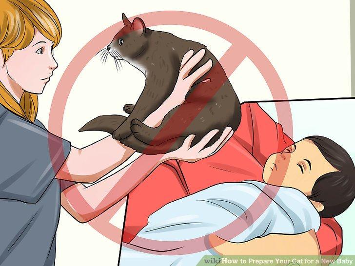 Belohnen Sie Ihre Katze.