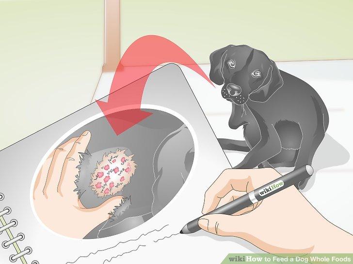 Überwachen Sie Veränderungen in Ihrem Hund.
