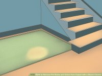 How to Remove Pet Stains and Odors from Carpet with a ...