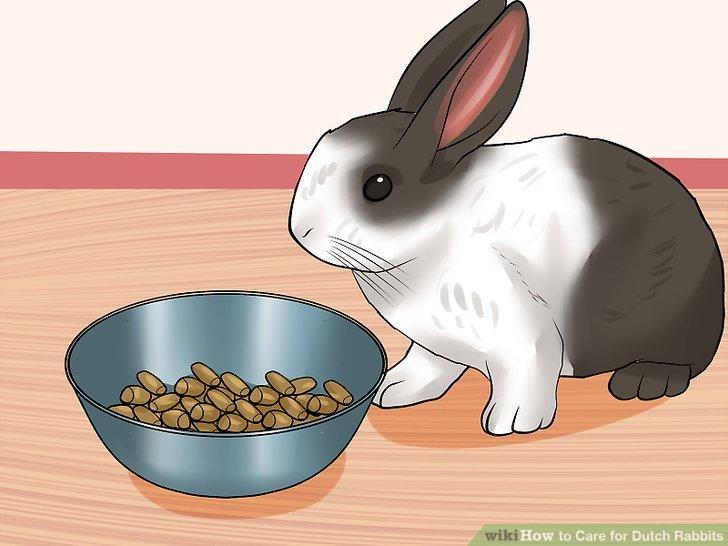 Geben Sie dem Kaninchen jeden Tag frische Pellets.