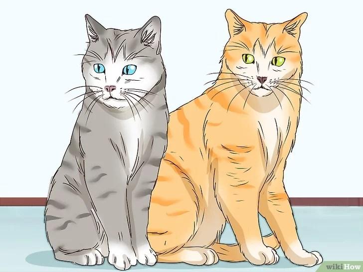 Tiêu đề ảnh Identify a Tabby Cat Step 4