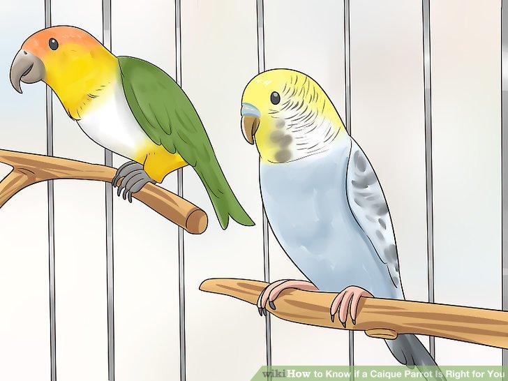 Betrachten Sie einen anderen Vogel, wenn Sie eine Voliere haben.