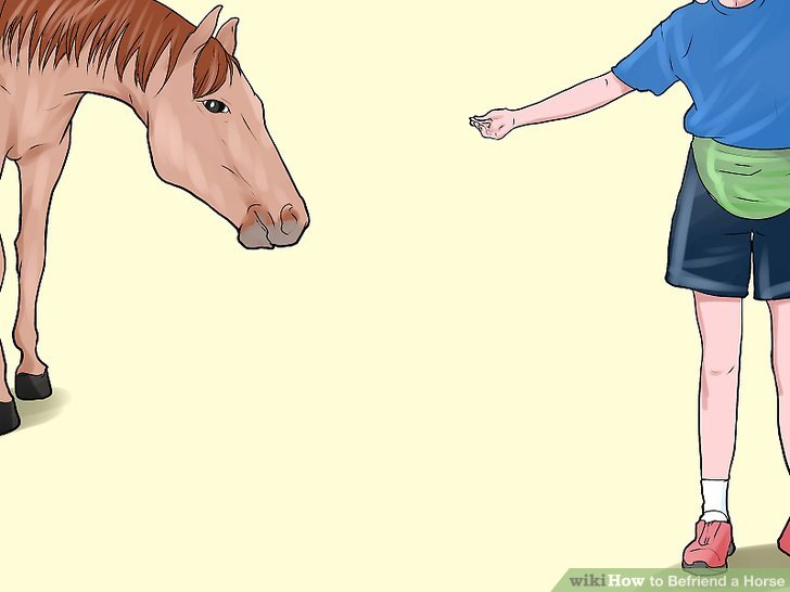 Talk to the horse