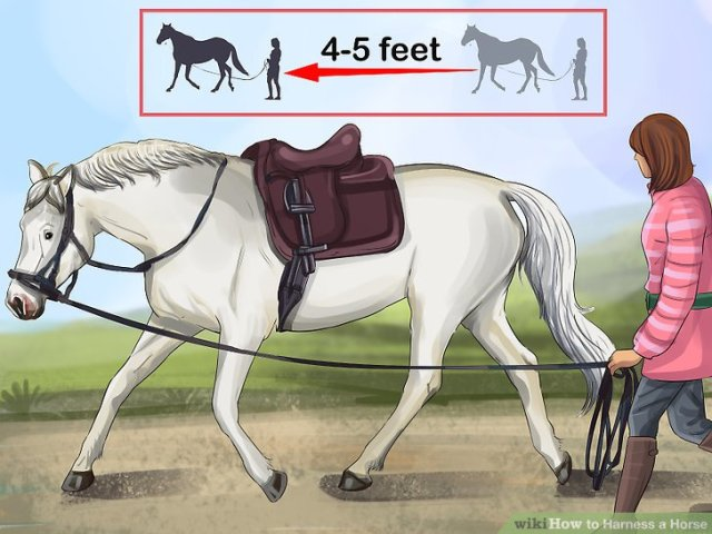 Harness a Horse Step 15 Version 4.jpg
