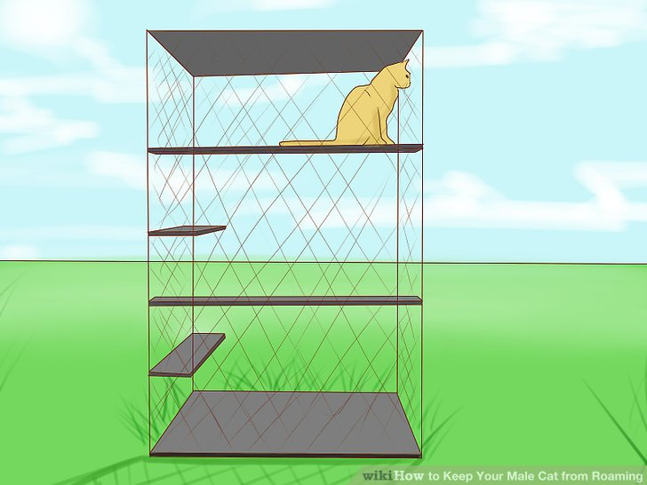 Erstellen Sie ein sicheres Gehäuse für Ihre Katze.