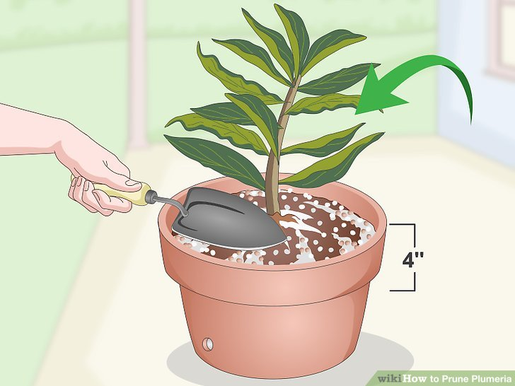 Plant the cutting about 4 in (10 cm) into the soil.