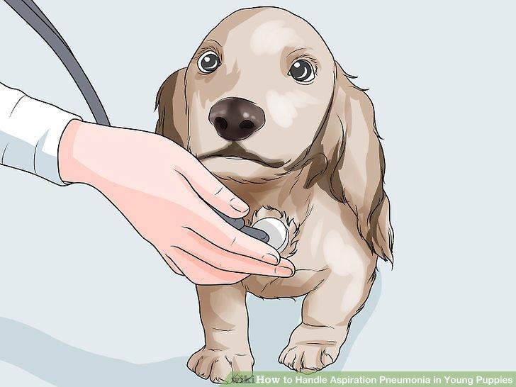 Lassen Sie Ihren Tierarzt Ihren Welpen untersuchen.