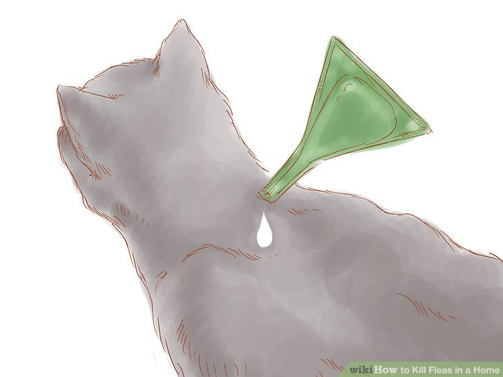 Use a flea product on your cat or dog.