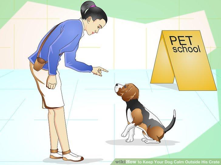 Registrieren Sie Ihren Hund in der Gehorsamschule.