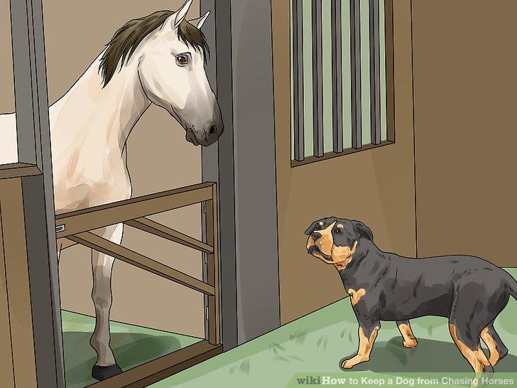 Bring deinen Hund in die Scheune.