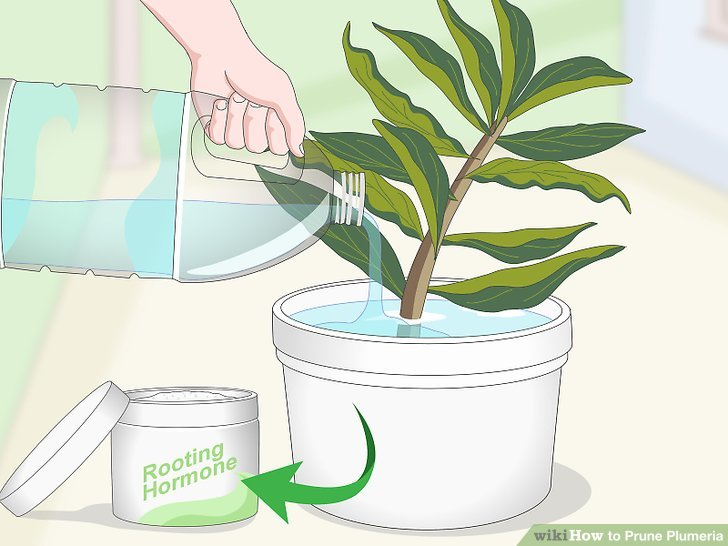 Dip the new cutting into water, then rooting hormone.