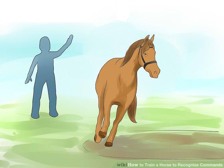 Beobachten Sie das Pferd genau.
