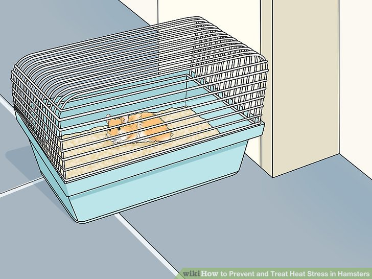 Stellen Sie den Käfig in den kühlsten Teil des Hauses.