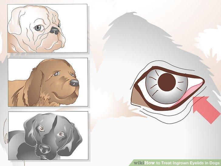 Betrachten Sie das Risiko Ihres Hundes.