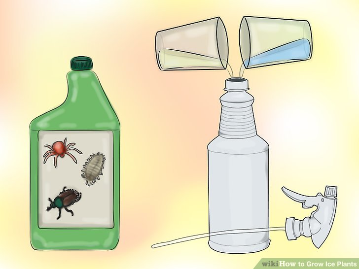 Create an insecticidal soap mixture.