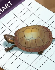 also how to tell  turtle   age by rings and size wikihow rh wikihowt