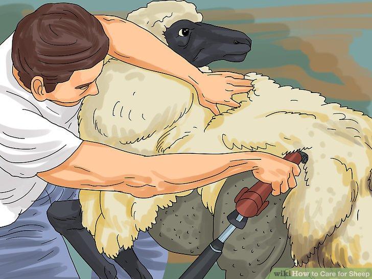 Entwurme deine Schafe.