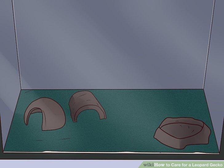 Kafesine gecko başına üç barınak ekle.