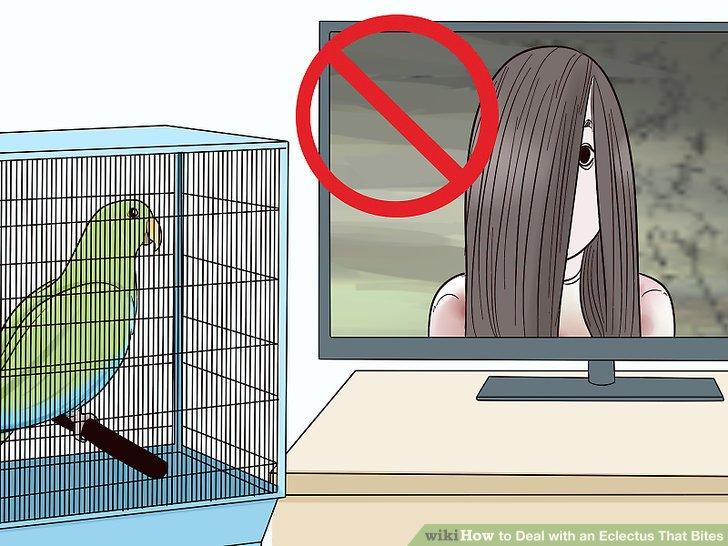 Vermeiden Sie es, Ihren Vogel Dingen auszusetzen, vor denen er Angst hat.