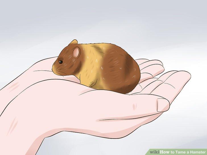 Nimm deinen Hamster auf.