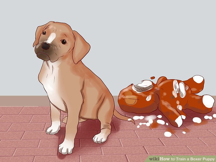 How to Train a Boxer Puppy - Practical Information