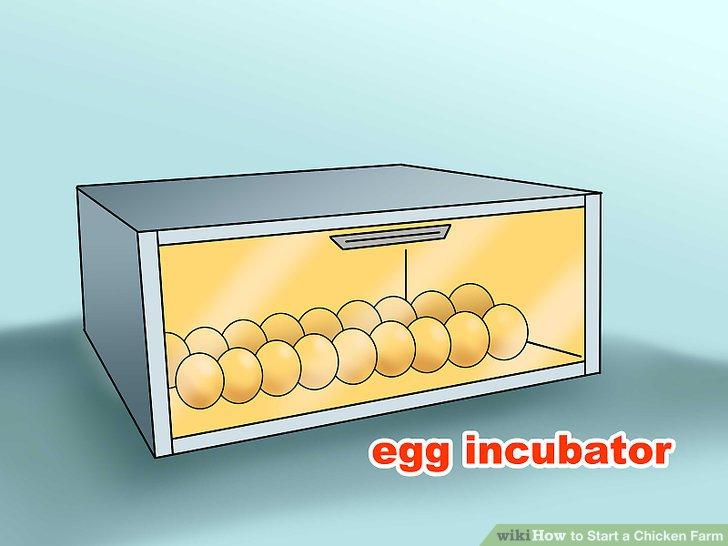 Kaufen Sie einen Inkubator, wenn Sie Ihre eigenen Hühner züchten möchten.