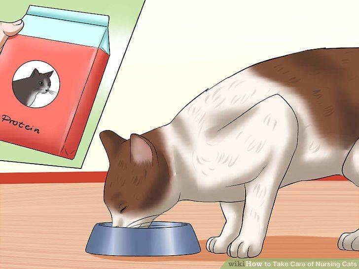 Stellen Sie sicher, dass die Katze genug Protein bekommt.