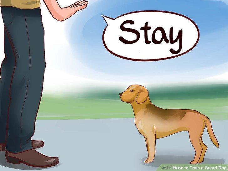 Stellen Sie sicher, dass Ihr Hund grundlegende Befehle zum Gehorsam befolgen kann.