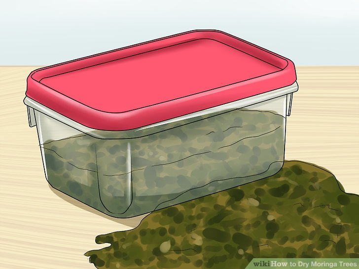 Store the leaves in a plastic container.