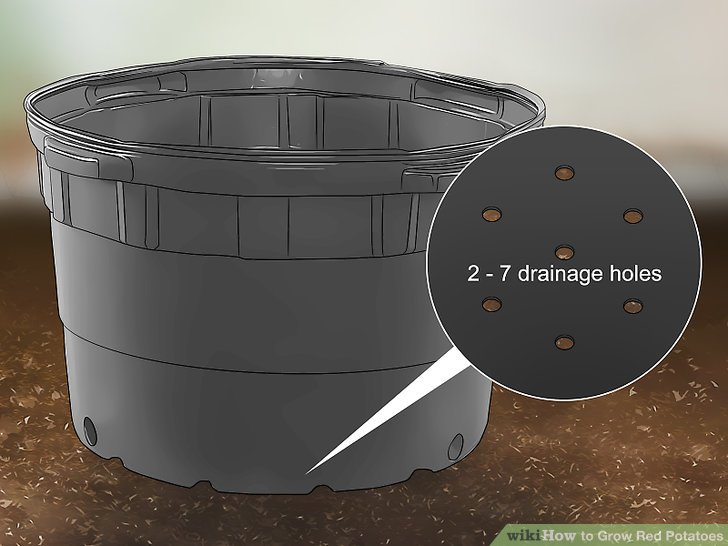 Make 2-7 drainage holes around the bins so your plants properly drain.