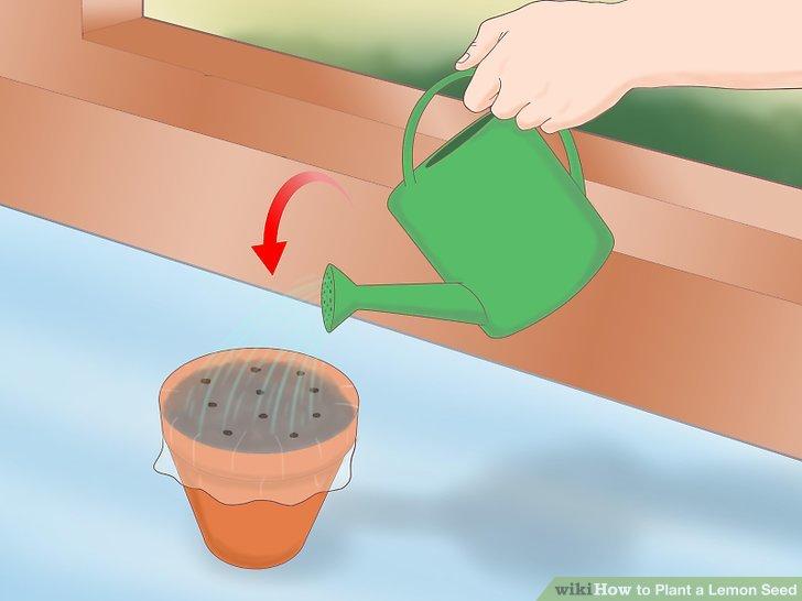 Wässern Sie den Boden, wenn Sie ihn trocken sehen.