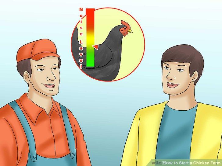 Fragen Sie den Züchter nach dem Geräuschpegel und dem Temperament der Hühner, bevor Sie sie kaufen.