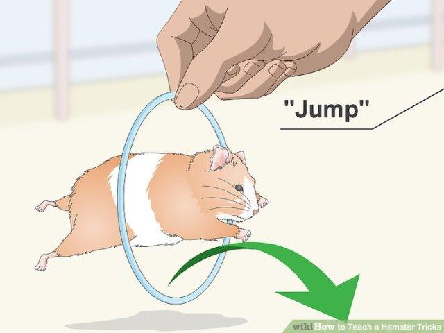 Teach a Hamster Tricks Step 7 Version 2.jpg