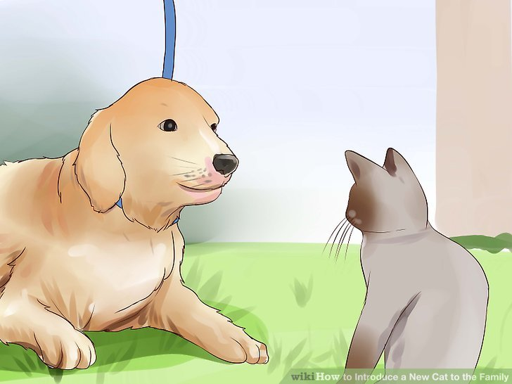 Introduce your cat to your dog.