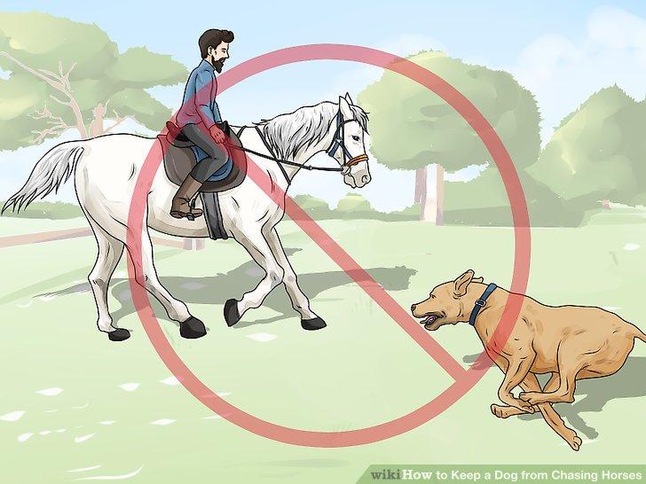 Bringen Sie Ihrem Hund bei, sich von Reitplätzen fernzuhalten.