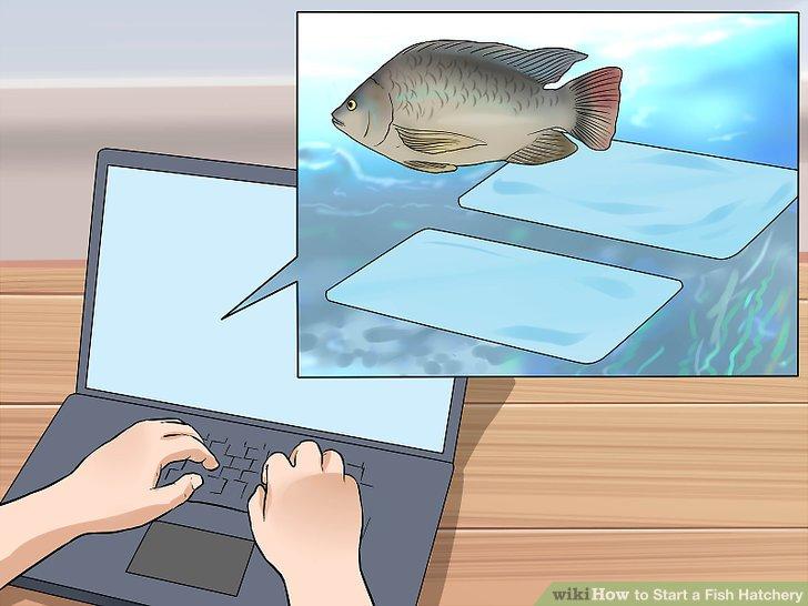 Informieren Sie sich über Fischbrütereien.