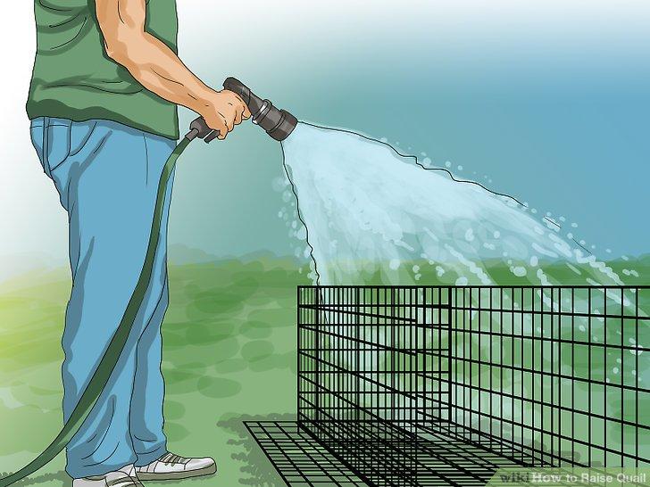 Reinigen Sie den Käfig, wenn sich Abfälle bilden.