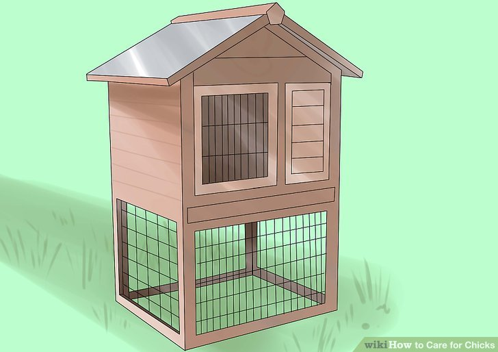 Prepare a coop and/or run for your chicks.