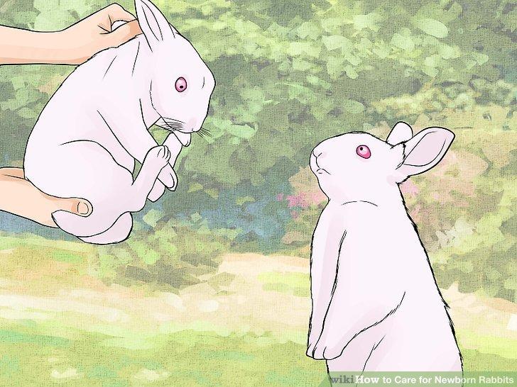 Trennen Sie sie vom männlichen Kaninchen.