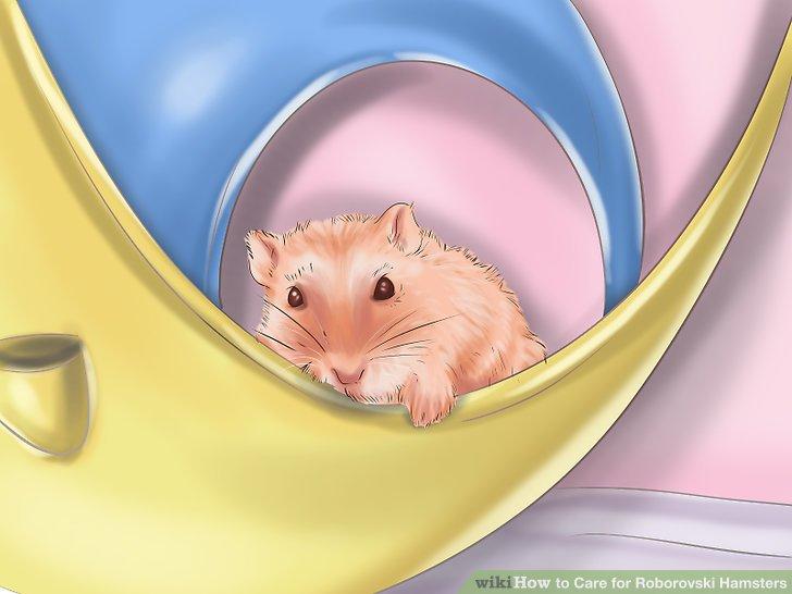 Stellen Sie sicher, dass Ihr Hamster wach ist, bevor Sie in den Lebensraum gelangen.