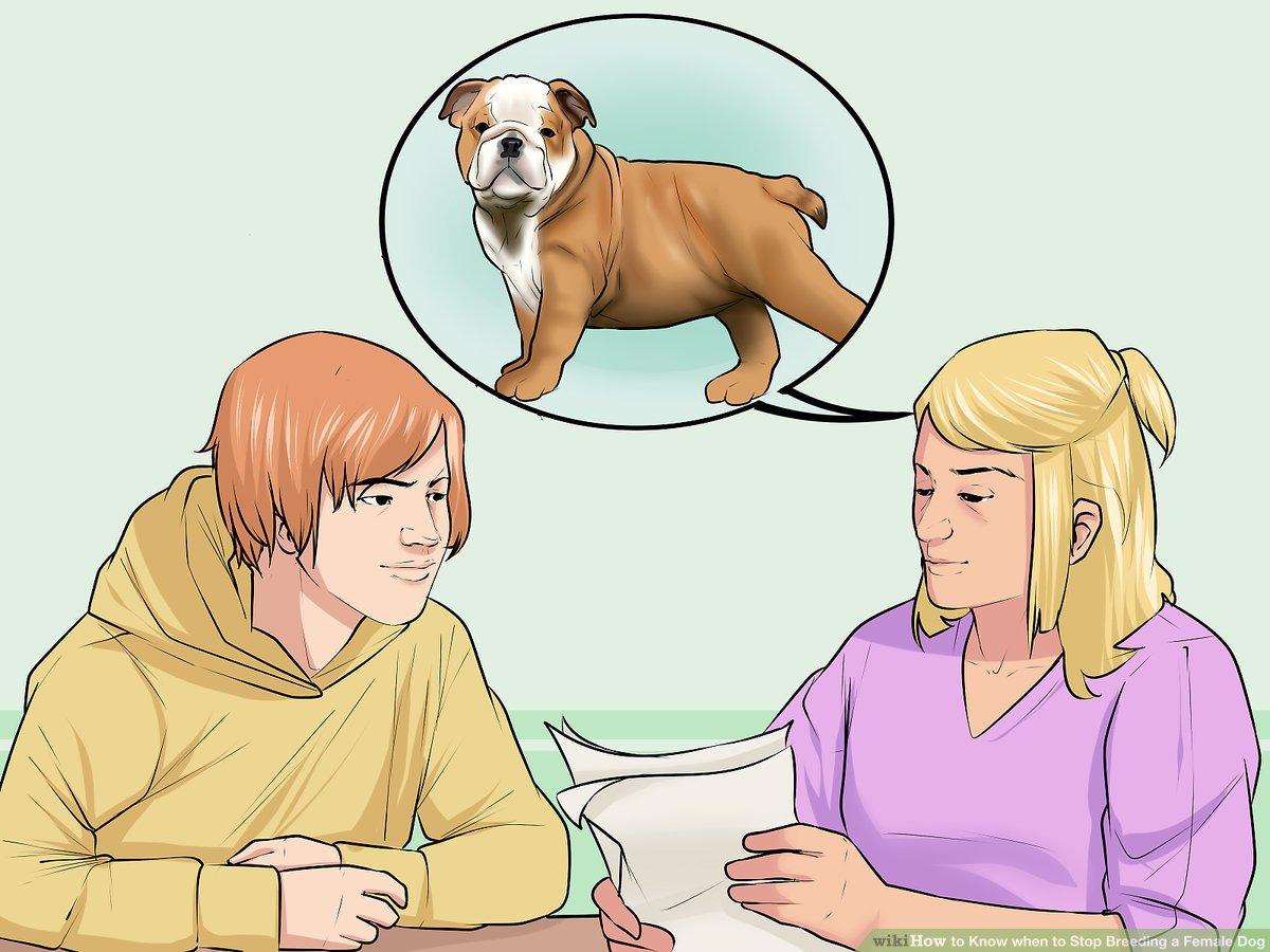 hight resolution of dog uteru diagram