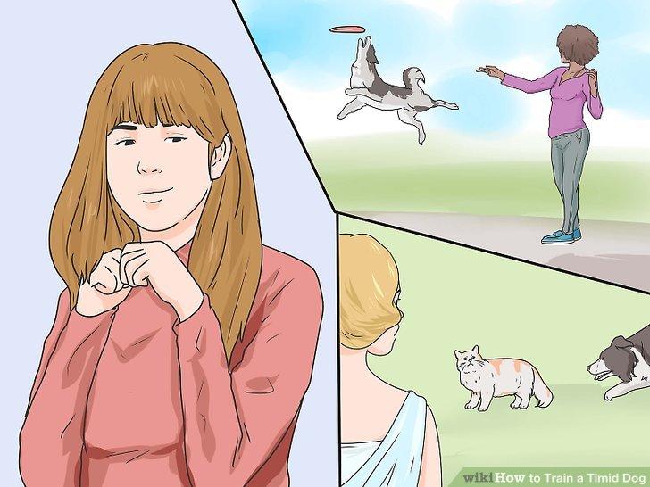 Führen Sie Ihren Hund schrittweise mit immer mehr Erlebnissen ein.