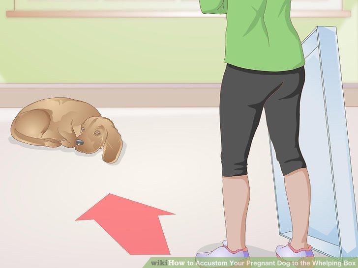 Köpeğinizin rahat hissettiği bir yer seçin.