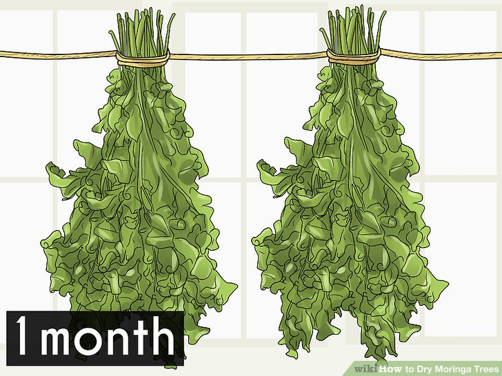Leave the leaves for about a month or until they will snap off quite easily at touch.
