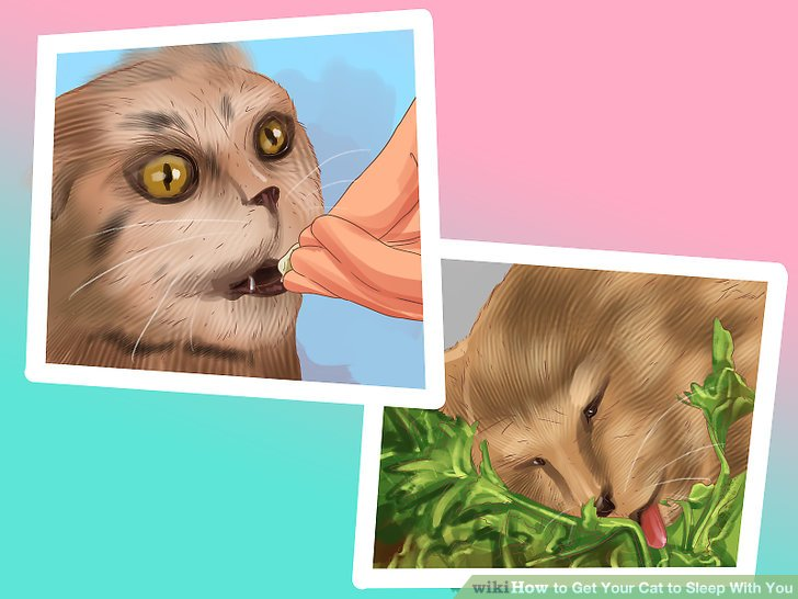 How to Get Your Cat to Sleep With You: 11 Steps (with ...